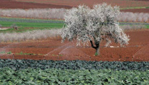 Water Reuse in Palestine: Challenges and Opportunities for Sustainability, Food Security, and Economic Growth